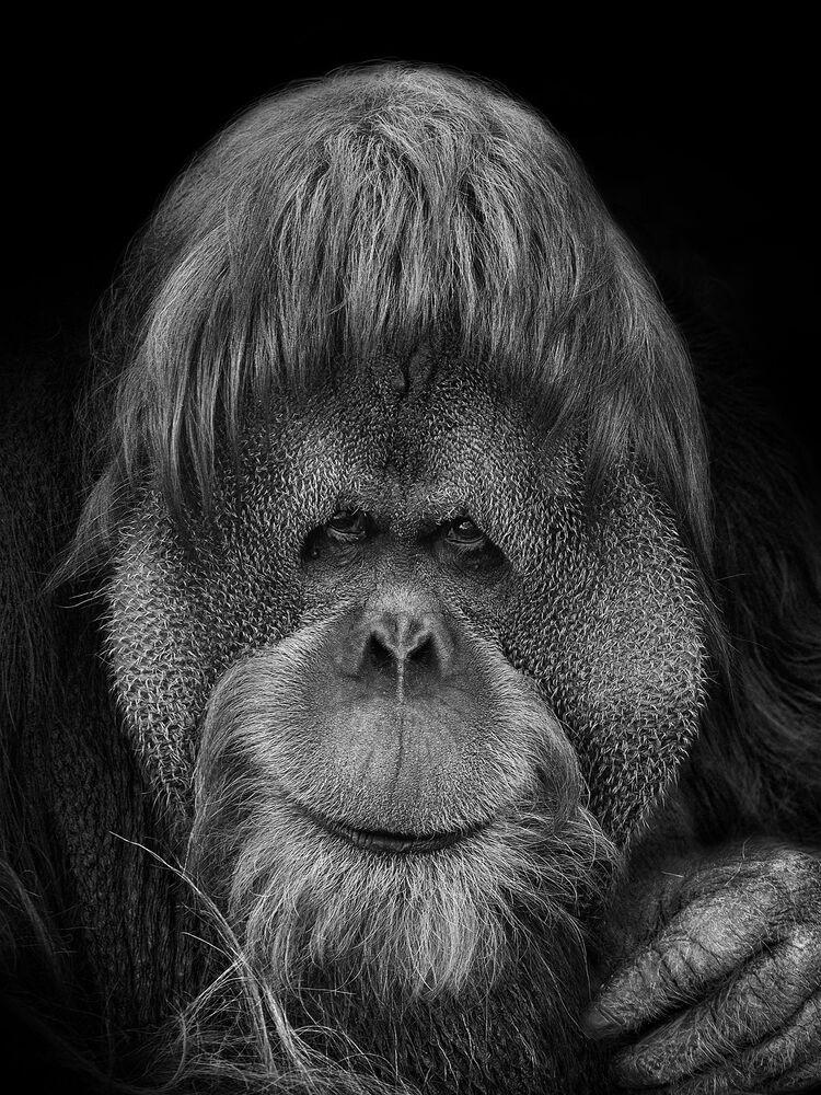 إحدى الأعمال المصورة للمصور الروسي ميخائيل كيراكوسيان، ضمن مشروع فني مصور بعنوان نحن نشبهكم، أبطالها حيوانات حديقة موسكو، أبريل 2021