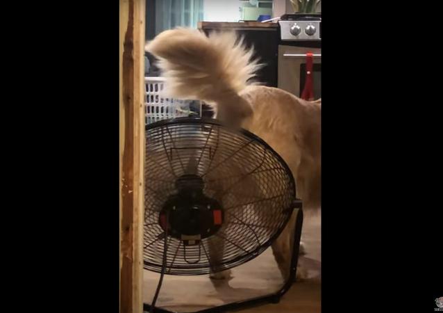 كلب يخفف معاناته بطريقة فريدة بعد تناول طعام حار... فيديو