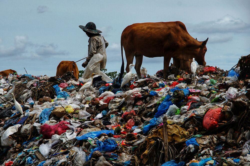 راع يأخذ أبقاره لترعى على القمامة التي تم جمعها بعد عطلة عيد الفطر، في مكب للقمامة ألو ليم في لهوكسوماوي، آتشيه 17 مايو 2021