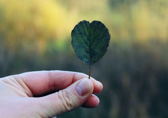 يد تمسك بورقة على شكل قلب