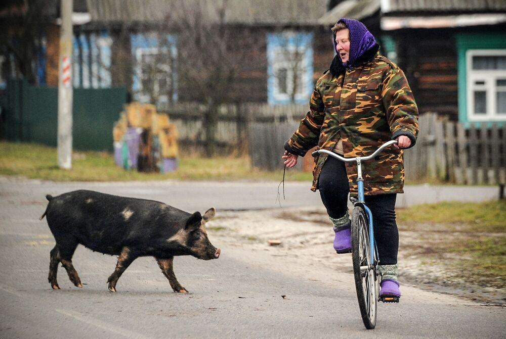 امرأة تركب دراجتها الهوائية وتتحدث إلى خنزير يعبر الطريق في قرية تونيج، بيلاروسيا 7 يناير 2018