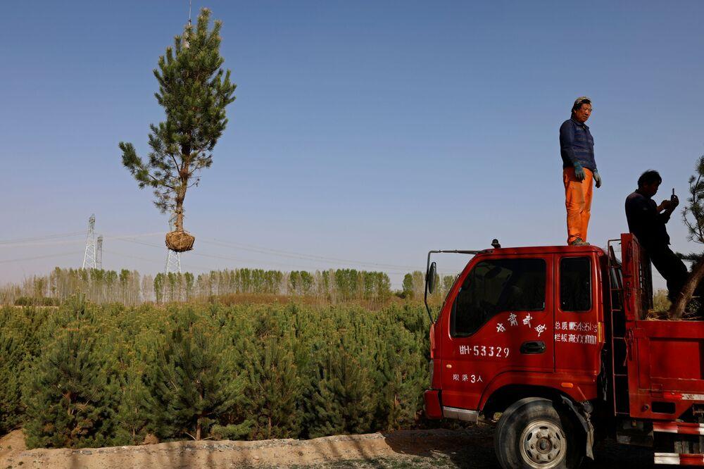 نقل شجرة في قرية في صحراء غوبي، محافظة غانسو، الصين، 16 أبريل 2021