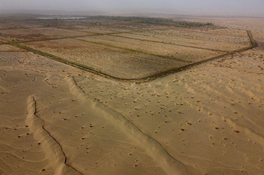 زرع الأشجار على حدود صحراء غوبي، محافظة غانسو، الصين، 13 أبريل 2021