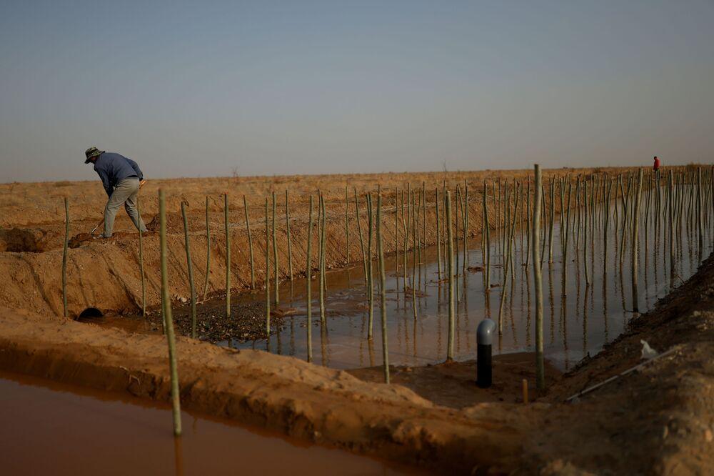 عامل يقطع الأرض بجوار قنوات الري في مزرعة الغابات الحكومية في يانغوان في ضواحي صحراء غوبي، مقاطعة غانسو، الصين 13 أبريل 2021