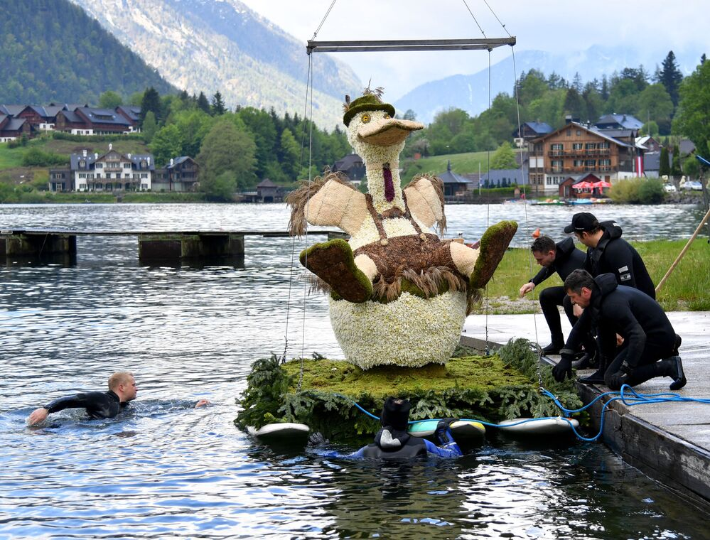 قارب يحمل شخصية حيوان مصنوع من أزهار النرجس الأبيض، استعدادا للعرض خلال مهرجان النرجس البري الحادي والستين في غروندلسي، منطقة أوسيرلاند، النمسا في 30 مايو 2021