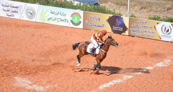 الخيول العربية الأصيلة في سوريا في اللاذقية