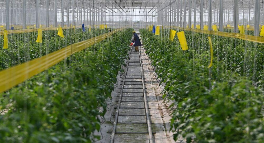 الصين تتوسع في استخدام الصوبات الزجاجية في الزراعة للتغلب على نقص إمدادات الغذاء وقت الأزمات