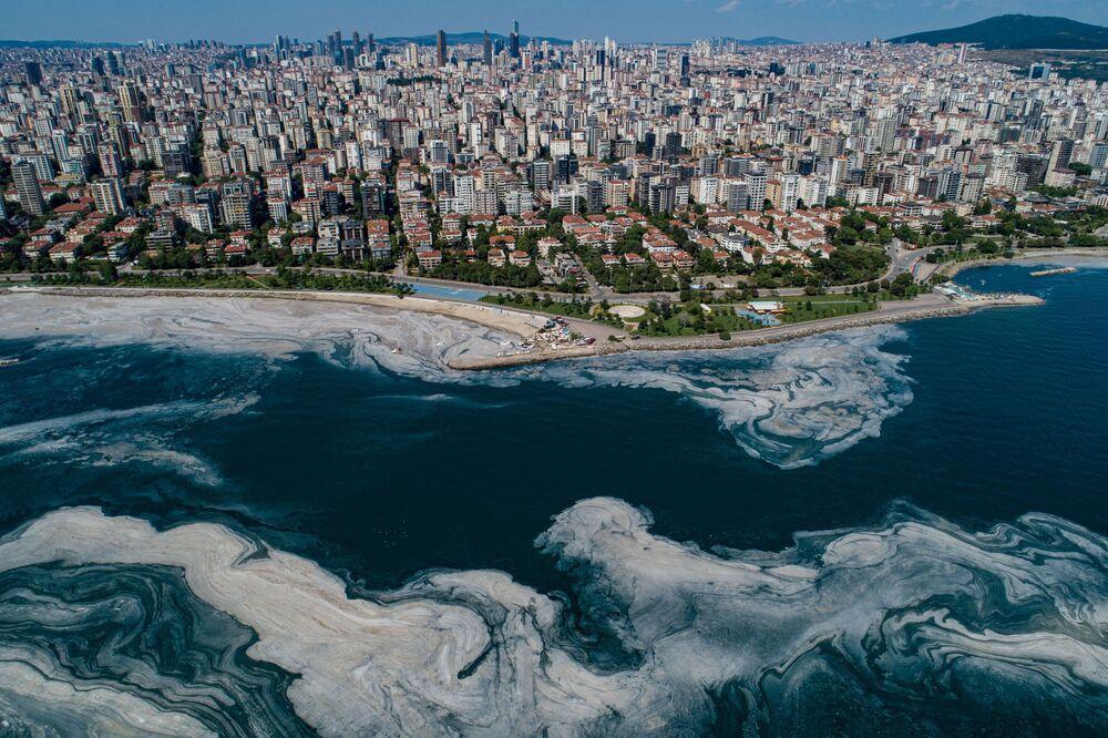 لعاب بحر مرمرة في اسطنبول