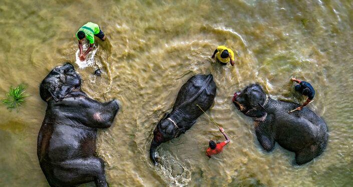 صورة حان وقت الاستحمام للمصور عبد المؤمن من بنغلاديش