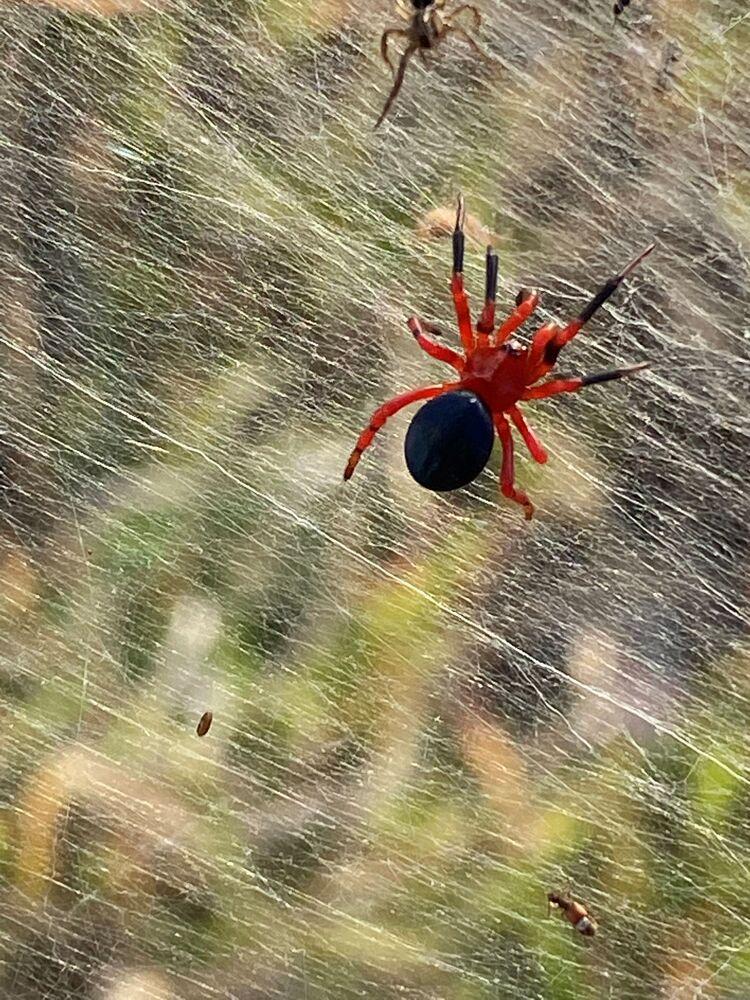 تُظهر صورة من مقطع فيديو انتشر على وسائل التواصل الاجتماعي، خيوط الـجوسامير نسجتها العناكب الحمراء بالقرب من الأراضي الرطبة في لونغفورد، منطقة فيكتوريا، أستراليا في 14 يونيو 2021