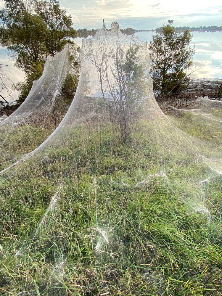 تُظهر صورة من مقطع فيديو انتشر على وسائل التواصل الاجتماعي، خيوط الـجوسامير نسجتها عناكب بالقرب من الأراضي الرطبة في لونغفورد، منطقة فيكتوريا، أستراليا في 14 يونيو 2021