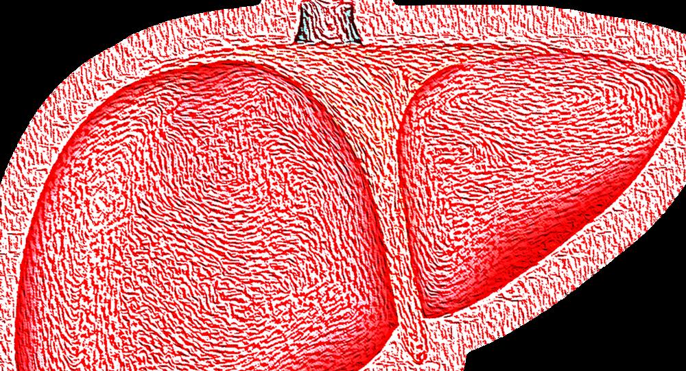 صورة توضيحية مرسومة للكبد
