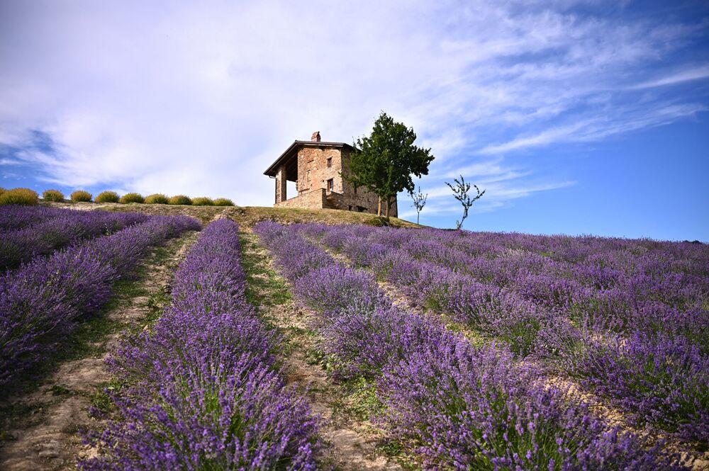 حقل لافاندر في سلا سان جيوفاني، بالقرب من كونيو، شمال غرب إيطاليا 29 يونيو 2021