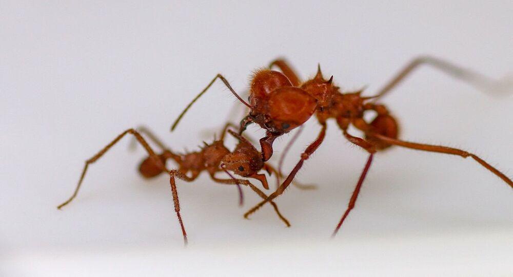 حشرات النمل