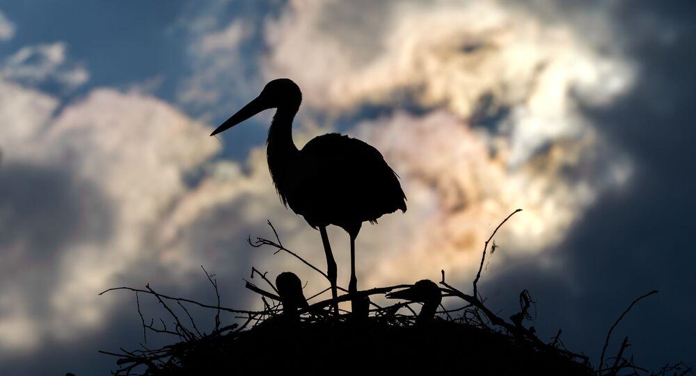 طائر يقف فوق عشه