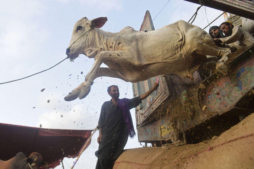 سوق الماشية في كراتشي