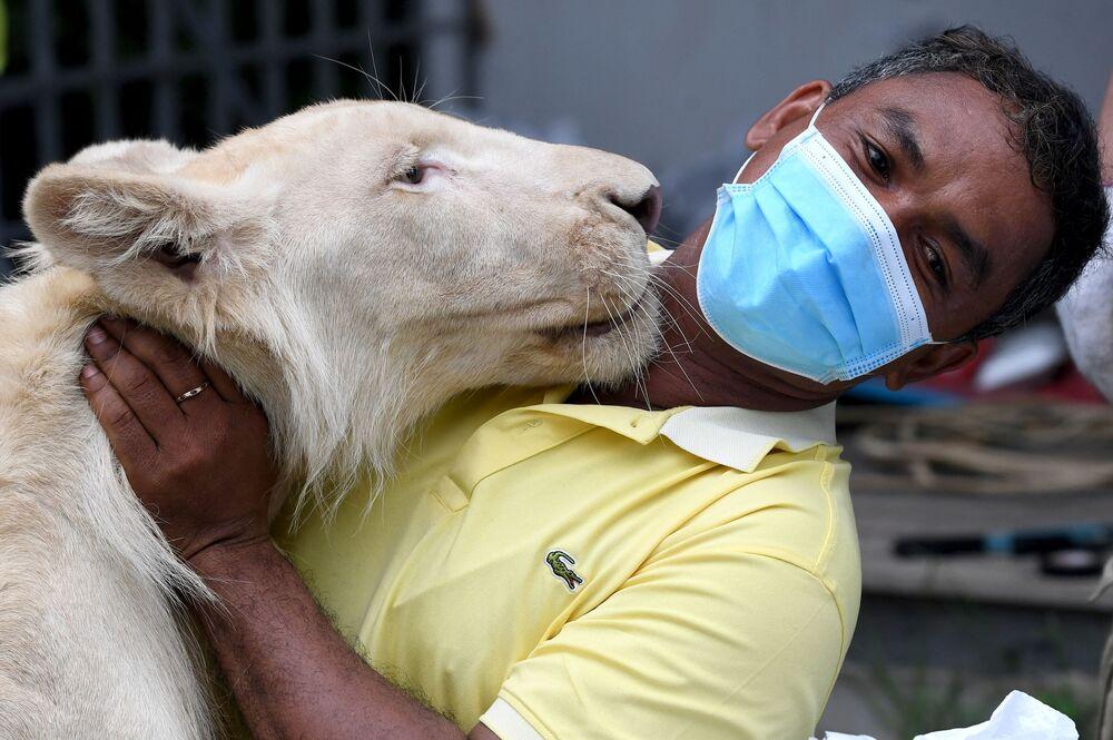 أسد  حديقة حيوان كمبوديا