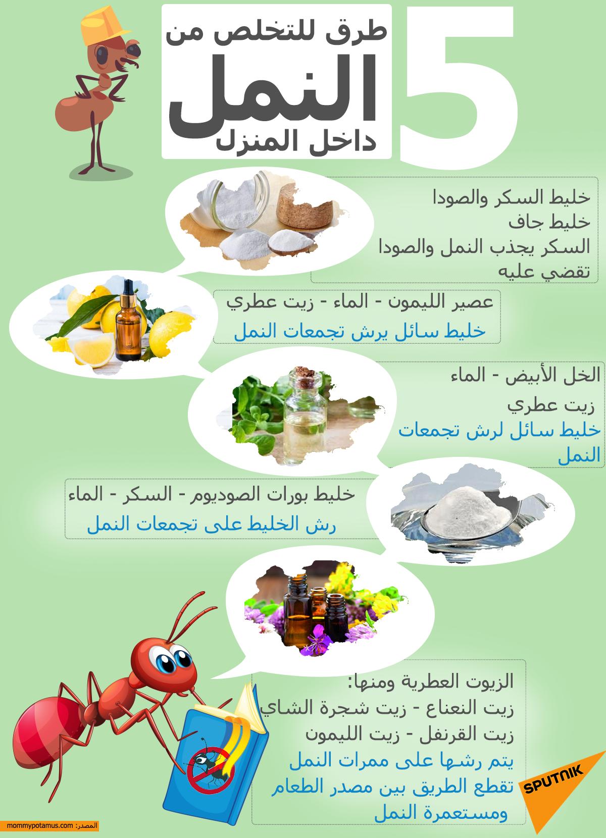 5 طرق للتخلص من النمل داخل المنزل