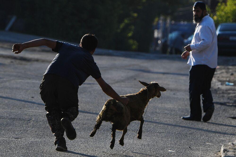 أجواء الاحتفال بعيد الأضحى ومحاولة الإمساك بخروف في أحد شوارع مدينة نوفوسيبيرسك، روسيا 20 يوليو 2021