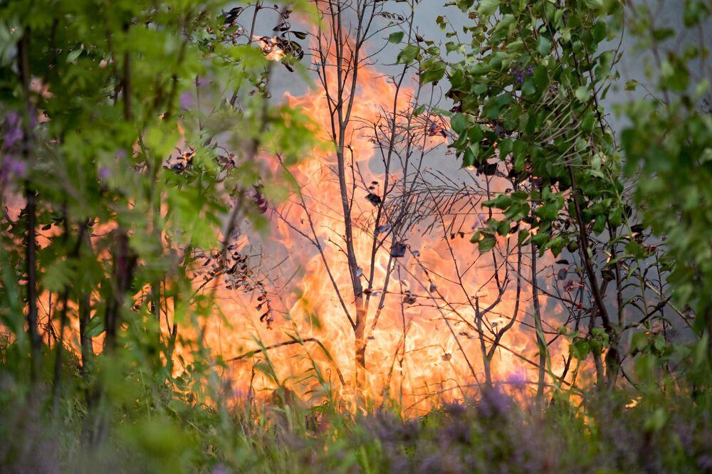 غابة تشتعل في حي سياموزيرا في كاريليا، روسيا 18 يوليو 2021