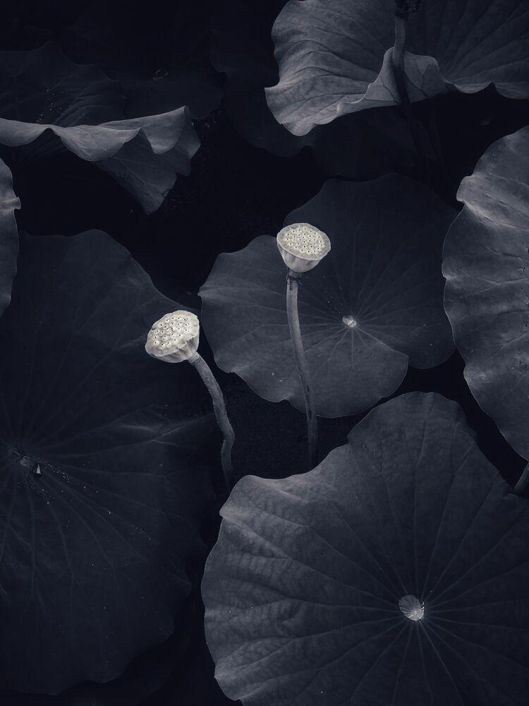 صورة، للمصور البريطاني موهان وانغ، الحائز على المركز الثاني في فئة الطبيعة من  مسابقة التصوير الدولية IPPAWARDS 2021
