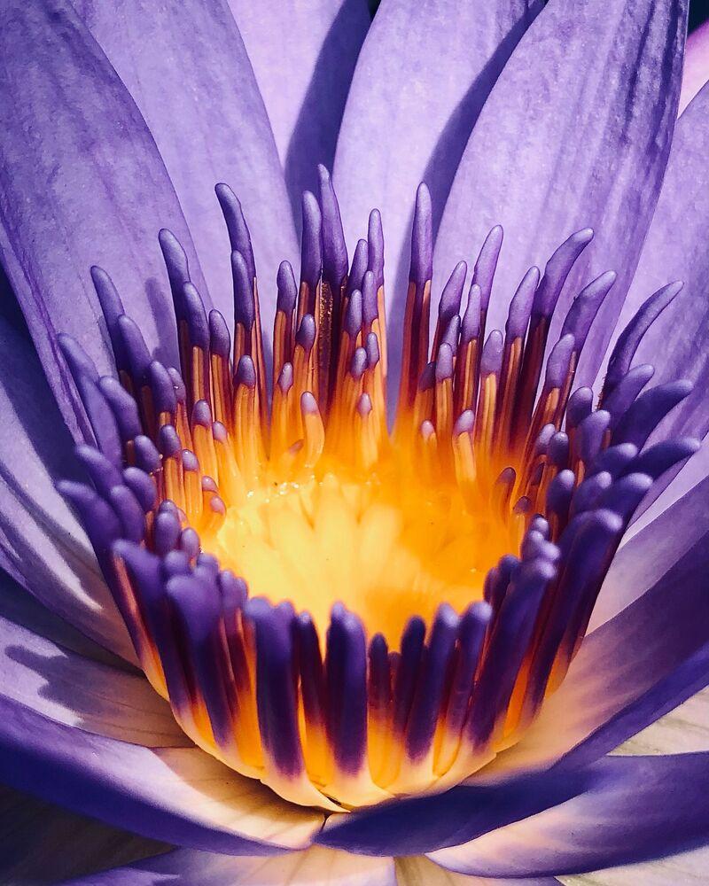 صورة بعنوان التأمل في الإيجابيات، للمصور الأسترالي كريستيان هورغان، الحائز على المركز الأول في ترشيحات الطبيعة من  مسابقة التصوير الدولية IPPAWARDS 2021