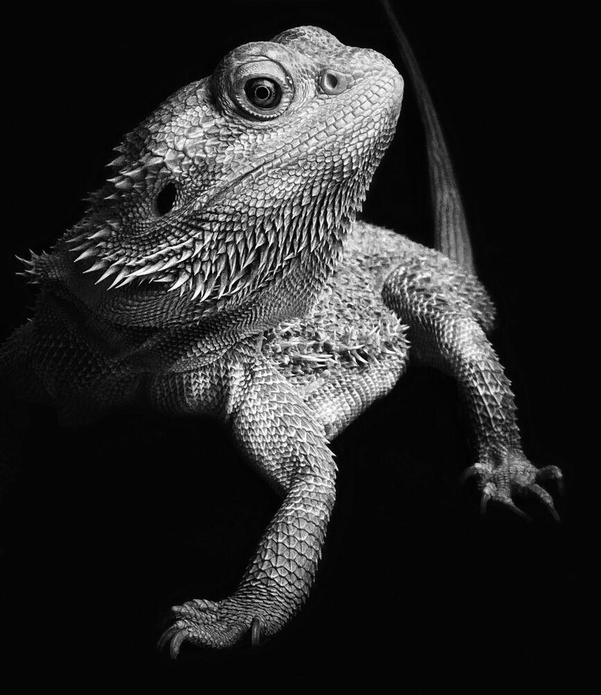 صورة بعنوان اتخذ وضعية لألتقط لك صورة، للمصورة الهولندية ليلى باكر، الحائز على المركز الأول في ترشيحات الحيوانات من مسابقة التصوير الدولية IPPAWARDS 2021