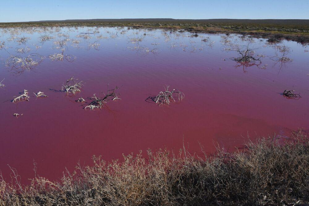 بحيرة وردية في محافظة تشوبوت، الأرجنتين 23 يلويو 2021