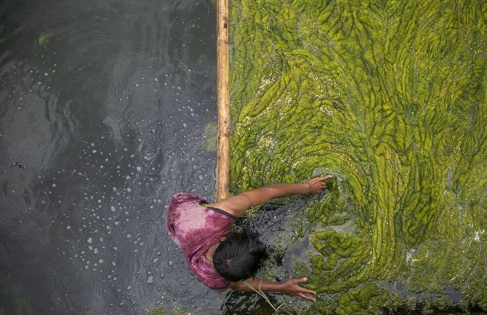 عامل نيبالي ينظف الطحالب في بركة كمال بوخاري في كاتماندو، نيبال  27 يوليو 2021
