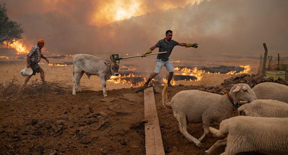 أهالي و حيوانات المناطق المتضررة من حرائق الغابات في تركيا، 2 أغسطس 2021