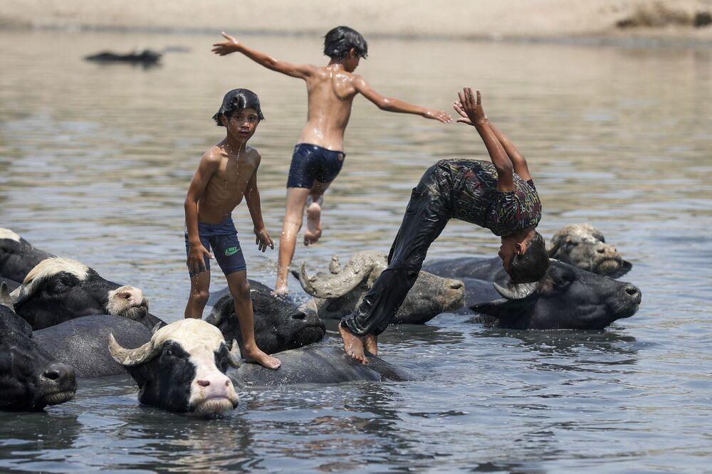 أولاد عراقيون يسبحون مع قطيع من الجواميس في نهر ديالى في منطقة الفضلية شمال شرق بغداد في 2 أغسطس 2021، وسط درجات حرارة صيفية شديدة الارتفاع.