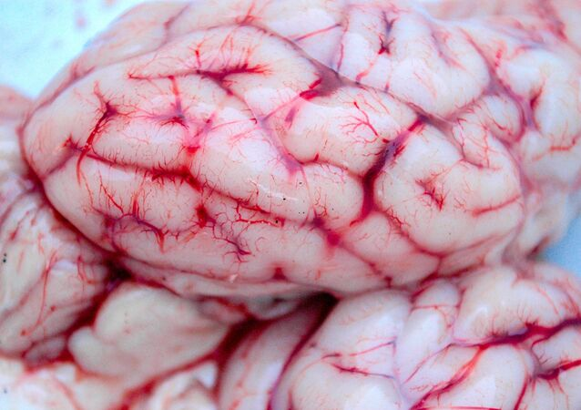 جزء من دماغ بشري في المختبرات العلمية
