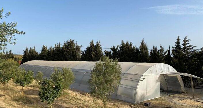 الزراعة المائية في تونس
