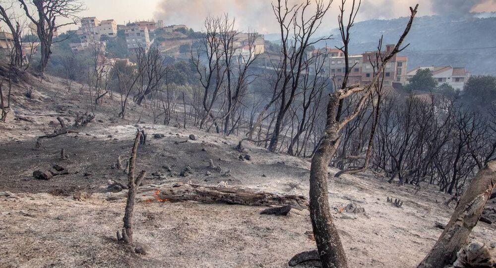 حرائق الغابات - الجزائر