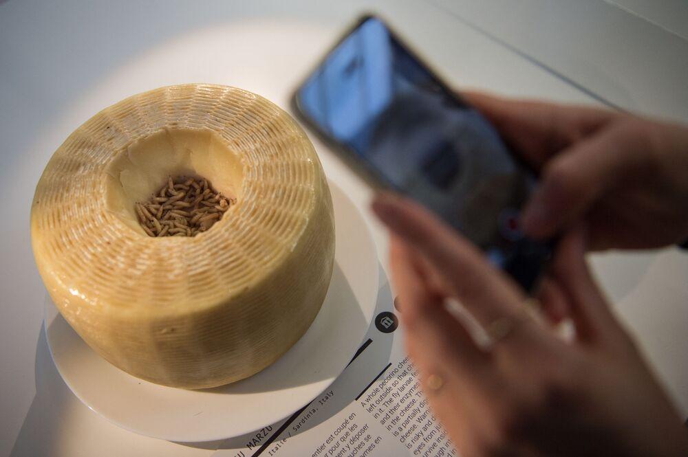 جبن كاسو مارزو (المعنى الحرفي: الجبن الفاسد) في متحف الطعام المقرف في فرنسا