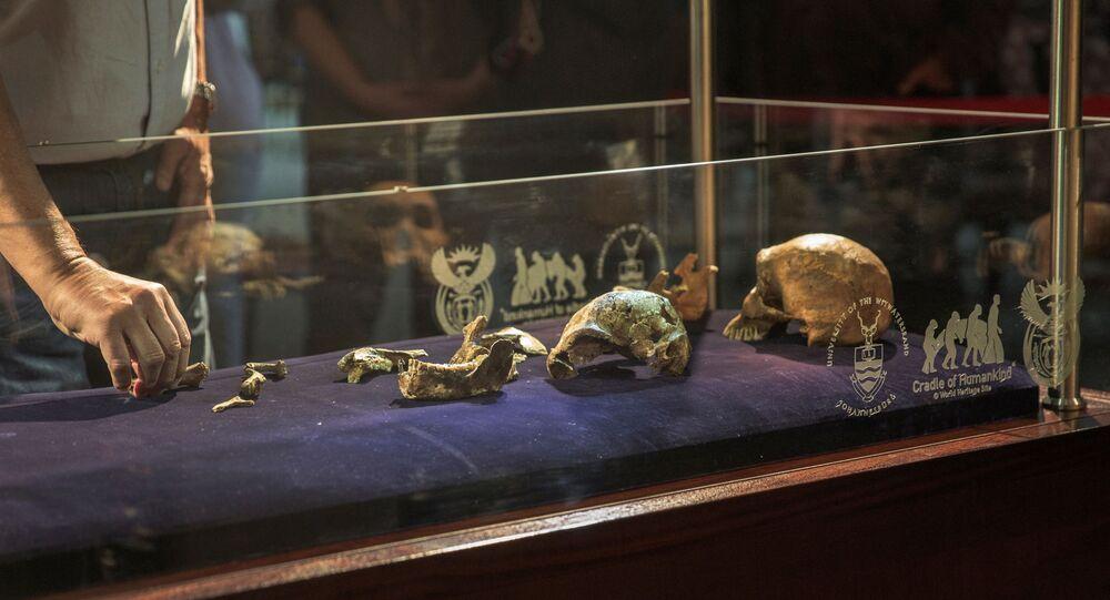 هيكل عظمي أحفوري جديد تم العثور عليه في منطقة Cradle Of Human Kind - بحث جامعة زيوريخ