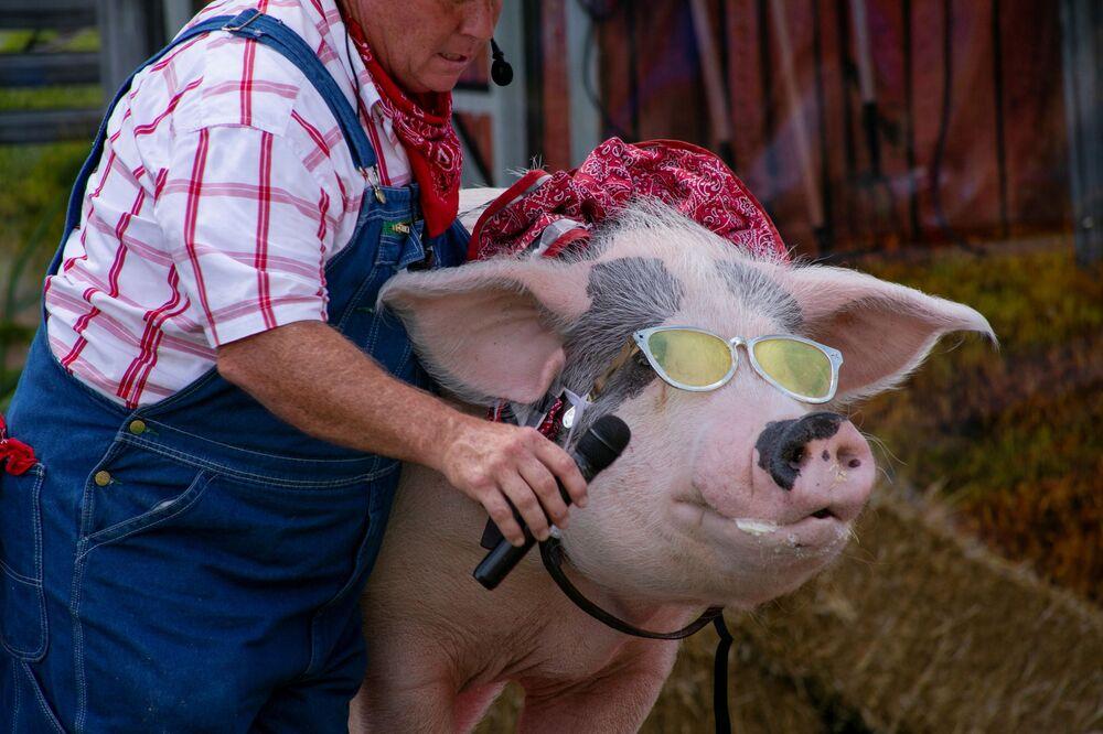 مزارع يعطي خنزيرًا ميكروفونًا ليغني على مسرح العرض الكوميدي ذا بورك تشوب ريفيو في معرض ولاية كنتاكي رقم 117 في لويزفيل، ولاية كنتاكي، الولايات المتحدة، 21 أغسطس 2021
