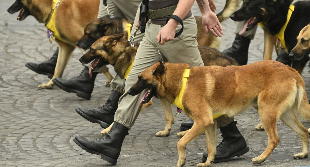كلاب تشارك في تدريب عسكري