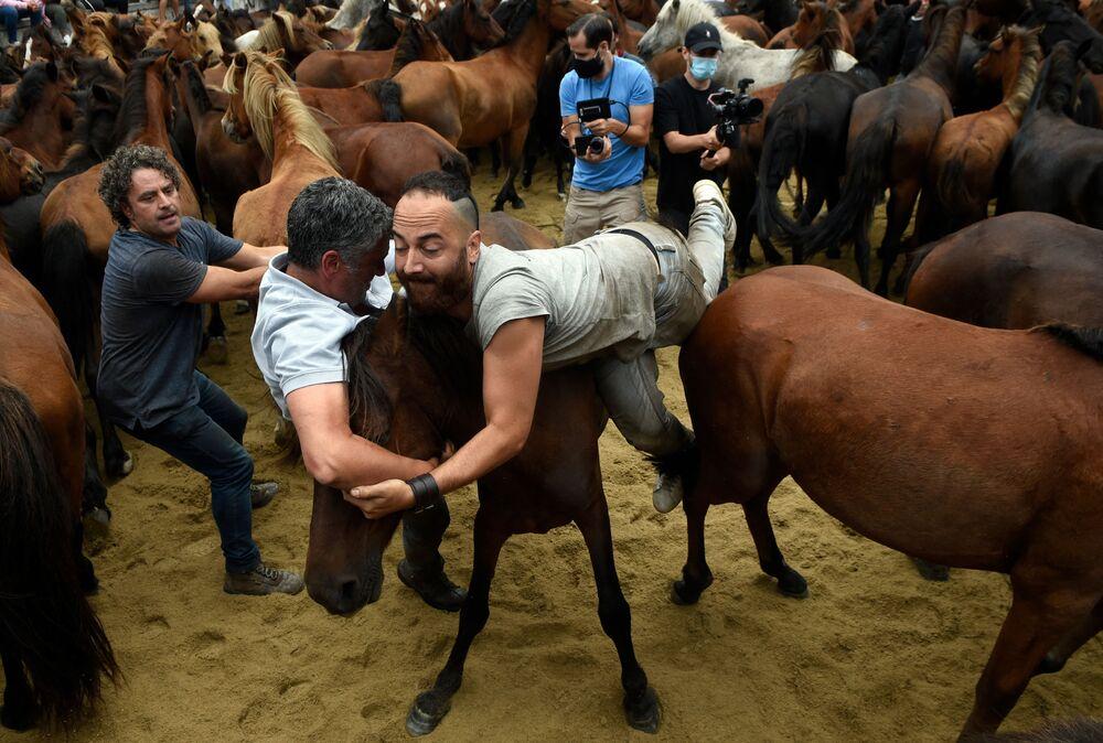 يصارع Aloitadors الخيول البرية خلال حدث قص شعر الحيوانات التقليدي في مدينة سابوسيدو، إسبانيا 29 أغسطس 2021