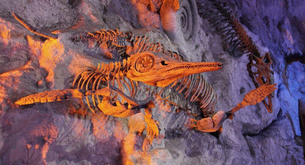 أحفورة قديمة جدا محفوظة في الطين