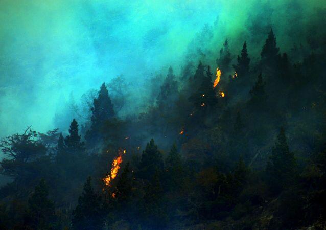 حرائق الغابات، شيلي