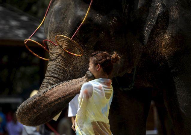 فيل يقبل طفلة من زوار معرض الفيلة في شيشوانغباننا في الصين