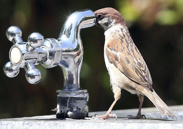 عصفور يحاول شرب الماء من الصنبور في حديقة في سوون، كوريا الجنوبية