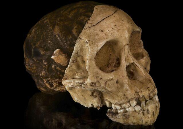 إعادة بناء جمجمة طفل التاونج