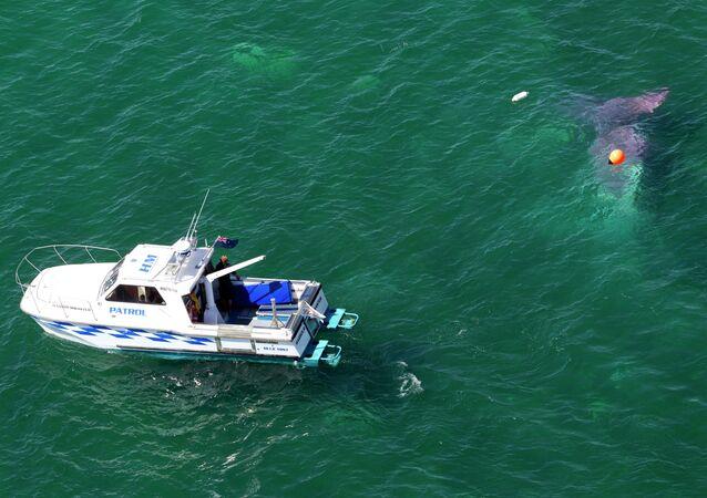 قارب شرطة نيوزلاندي يبحث عن مفقودين