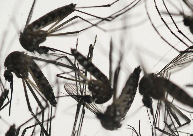 نوع البعوض الذي ينقل فيروس زيكا