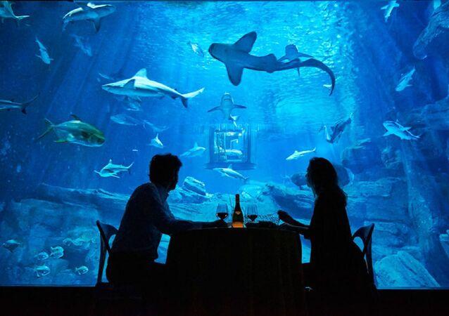 أستمتع بقضاء ليلة مع أسماك القرش