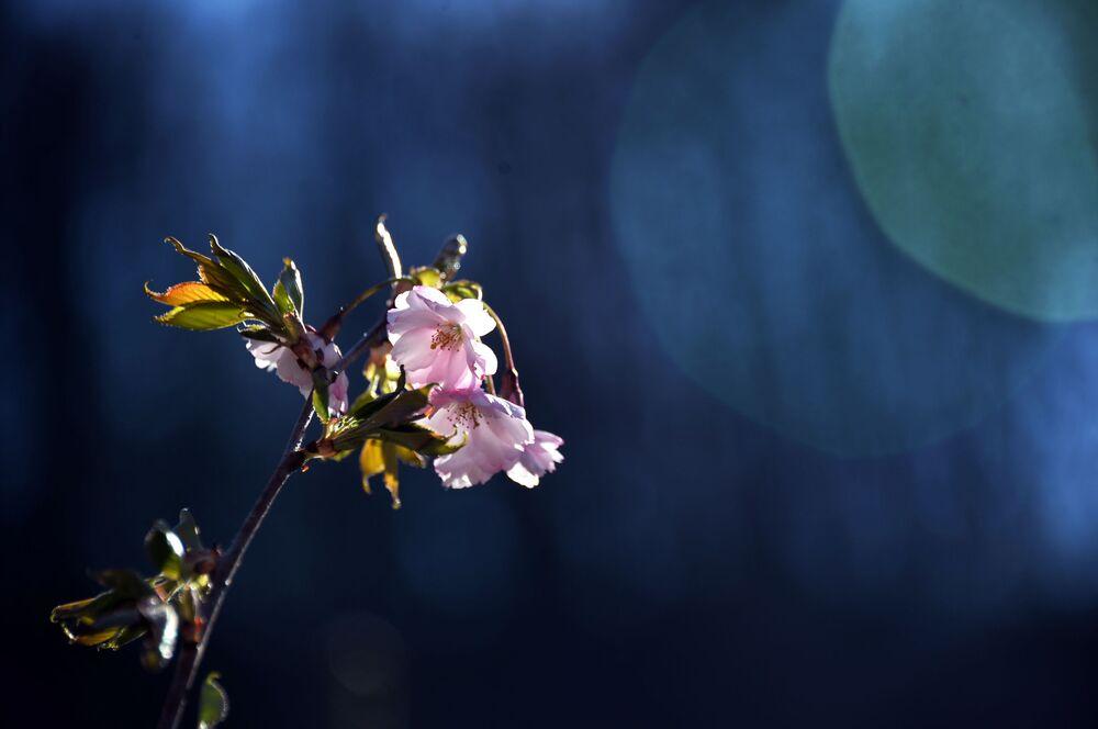 قلب سوتشي: منتجع سوتشي في الربيع