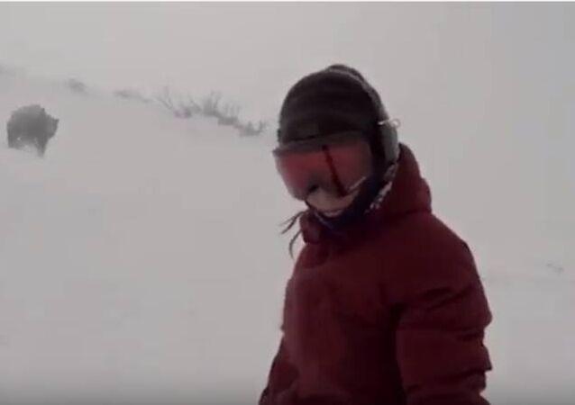 متزلجة على الثلج بالكاد تنجو من دب يطاردها