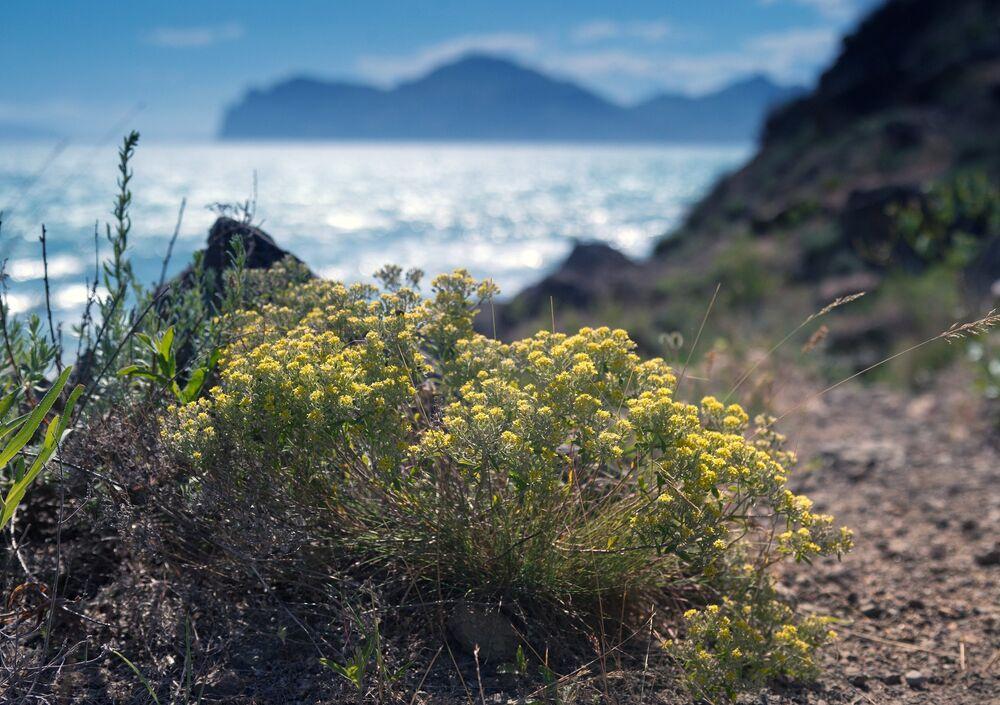 حقول وردية في قرية أورجونيكيدزي، شبه جزيرة القرم.